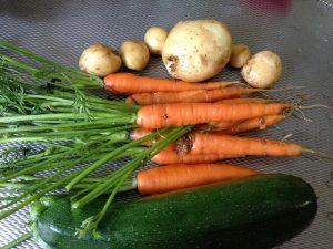Η κηπουρική στα σχολεία ενθαρρύνει την υγιεινή διατροφή στα παιδιά
